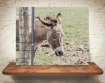 Donkey Photograph - Color Photography - Fine Art Print - Home Wall Decor - Farm House Decor - Animal Pictures - Children's Room - Gift
