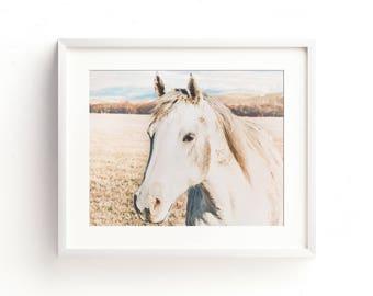 "horse photograph, horse wall art, art print, horse, large art, large wall art, wall art prints, nature photography, art - ""Meadow Morning"""
