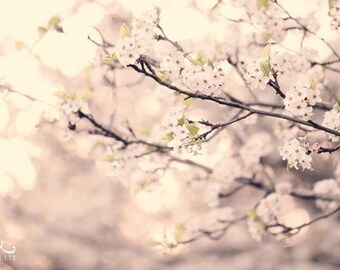 Tree Blossom Photo Print - Flower Photography, spring wall art, home decor, gifts for her, easter gift, art print, wall hanging, botanical