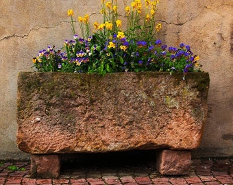 Fine Art Color Photography of Old Stone Planter and Flowers in Kaysersberg France - Square or Vertical