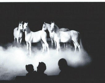 New York City, Big Apple Circus Horses, 1997.  An Original Photo Art Card.