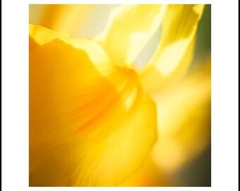 Abstract Yellow Flower Art Print - Yellow Art - Flower Photography - Nature Photo - Contemporary Art - Modern Art