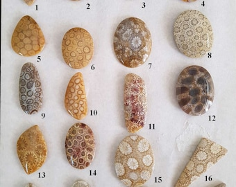 Fossil Coral Cabochon's