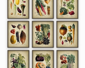 Vegetables Kitchen Wall Art Print Set of 9 - Antique Botanical Art -Garden Vegetables Rustic Vintage Kitchen Wall Art Poster Set of 9 (B244)