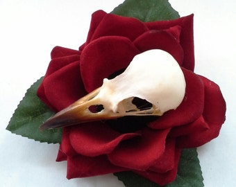 magpie taxidermy small red welvet rose with leaves