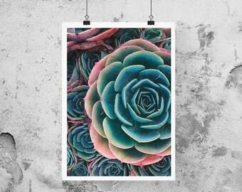 succulent print, cactus wall art, succulent wall decor, succulent art print, cactus art, succulent poster, succulent printable art