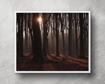 Forest photography, DIY forest wall art, Printable art, Forest wall art, Forest artwork, Nature photography