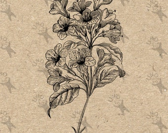 Vintage image Flower Instant Download Digital printable clipart graphic Burlap Fabric Transfer Iron On Pillows Tote Towels HQ 300dpi