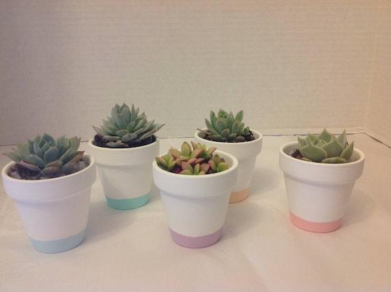Succulent plant wedding favors. Beautiful terra cotta pot. DIY 10 ...