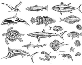 19 Stock Illustrations of Sea Animals
