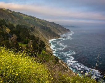 Yellow flowers and view of the Pacific Coast, in Big Sur, California. Photo Print, Metal, Canvas, Framed.