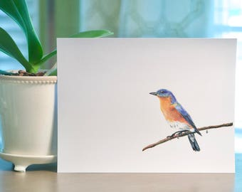 Bird Print, Wall Print, Colored Pencil Drawing, 8x10inches, Blue and Orange: Eastern Bluebird