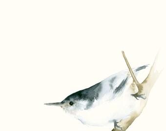 Bird Art Card Blank Greeting Card Nuthatch