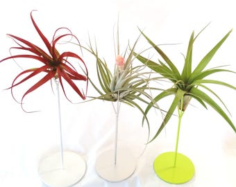 Air Plant on Colorful Tall Metal Plant Stand   Home Decor , Office Accessory , Unique Plant , Choose your Plant , Choose your Planter Color