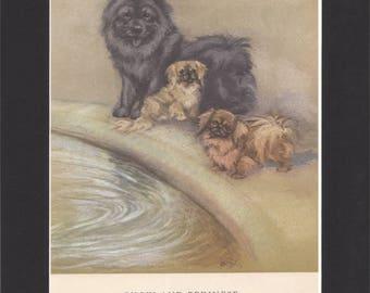 Chow Print Pekinese Print Vintage Dog Print George Vernon Stokes 1947 Bookplate Drawing Mounted with Black Mat Pekingese Print Chow Dog