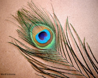 10 beautiful peacock feathers for creations