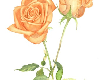 Original orange roses watercolour painting for home decor, Botanical art illustration, Flower