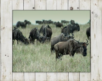 African Wildebeest | Kenyan Safari Photography | Instant Digital Download | Printable in various sizes!