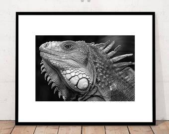 Modern Art Photography, Modern Art Print, Dragon Print, Black and White, BW Print, Close-up Dragon,  Digital Download Wall Art