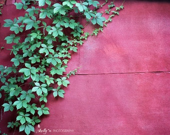 Nature Photography- Red Wall Vine Print, Climbing Vine Photo, Red Art, Green Leaves, Red Barn Photo, Garden Wall Art, Red Green Decor