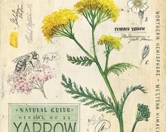 Yarrow Print, Botanical Print, Botanical Illustration, Floral Print, Floral Illustration