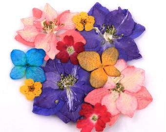 Pressed flowers mix,  larkspur, hydrangea, verbena, bridal wreath