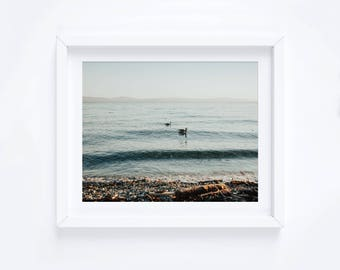 Canadian Geese in the Ocean Print, Wall Art, Photography, Pacific Ocean
