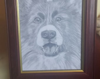 Welsh collie .Original drawing .picture.