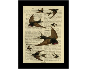 Swallows Flock Vintage Birds British Avarian - Dictionary Print Book Page Art