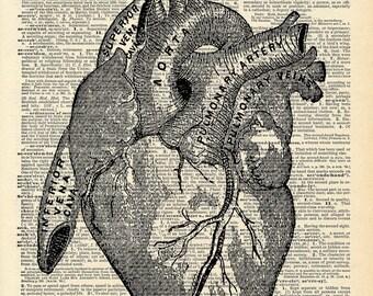 Vintage Book Art Print - Anatomical Heart Art - Upcycled Book Print - Love Heart - Anatomical Medical Diagram - Dictionary Art Print