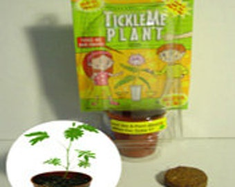 TickleMe Plant  Party Favor and Paint set. Grow the houseplant that closes its leaves when Tickled