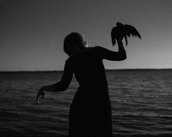 The Harbinger - Whisper Series,  dark photography, raven art, black and white art print