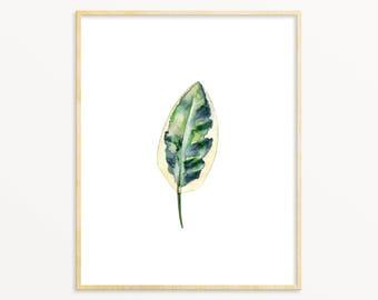 Watercolor Botanical Art Print. Botanical Leaf Painting. Watercolor leaf Art. House Plant Art. Nature Wall Art. Nature Painting. Kitchen Art
