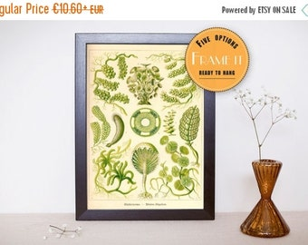 "Summer sale 15% OFF Vintage illustration by Ernst Haeckel  - framed fine art print, sea creatures,sea life, home decor 8""x12"" ; 11""x16"", 264"