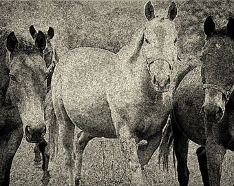 wall art,, photography,black and white, horses, country home, western art, horse lovers, horses, made in Canada