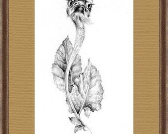 Funny Surreal Illustration Fantasy Art ORIGINAL PENCIL DRAWING Hand drawn black and white Fancy botanical illustration Framed drawing