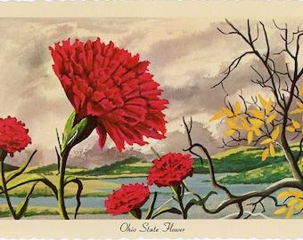 Ohio State Flower - Scarlet Carnation Vintage Postcard Signed Artist Ken Haag (unused)