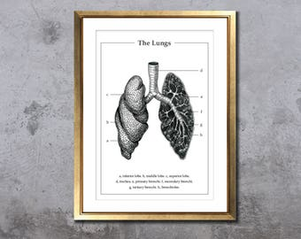 Anatomy of the lungs, pulmonology, respiratory pen drawing, human organ poster, anatomical art, A5 A4 print, medical student graduation gift