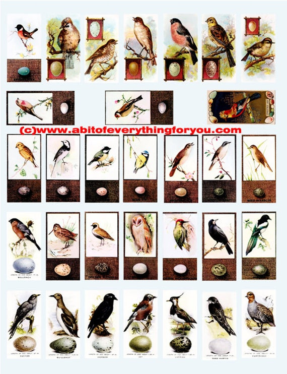 "vintage birds and their eggs clip art digital download domino collage sheet 1"" x 2"" inch graphics images printables for pendants pins"