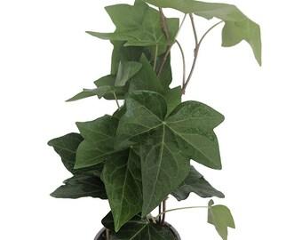 Golden Devil S Ivy Pothos Epipremnum 4 Pot