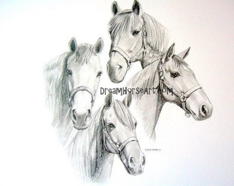 HORSE pencil Portraits, beautiful hand created custom art by professional artist M Theresa Brown, graphite, equine, commissioned portrait