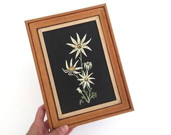 Framed Flannel Flower Botanical Painting
