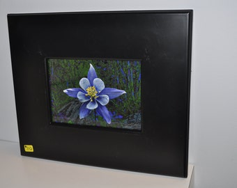 Framed Columbine