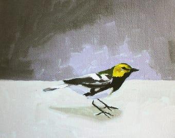 Black Throated Green Warbler