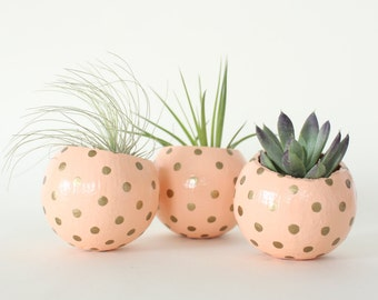 Peach & Gold Air Plant Planter Pod. Hand painted Air Plant Terrarium. Apricot Metallic Gold Dots Spots Modern Planter Thank you hostess Gift