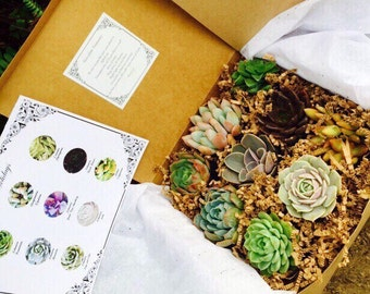 Holiday Succulent Candy Box. 9 Assorted Premium succulents with Choice of Tag Succulent Treasures