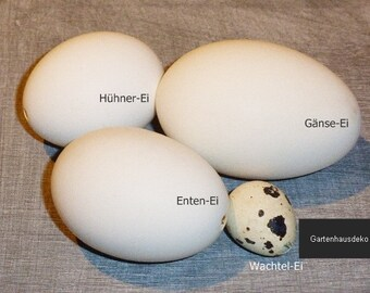 Chicken Eggs quail ducks-goose eggs