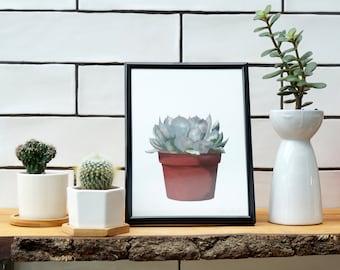 Succulent - Limited Edition Fine Art Giclée Print