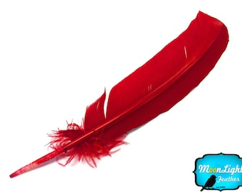Turkey Quill Feathers, 6 Pieces - RED Turkey Rounds Secondary Wing Quill Feathers : 2262
