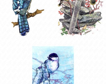 Painted Birds Blank Greeting Holiday Note Cards (Single or Pack of 6)